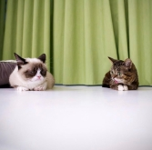 Grumpy Cat and Lil Bub