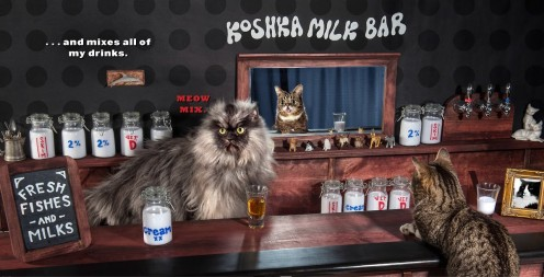 Colonel Meow and Lil Bub